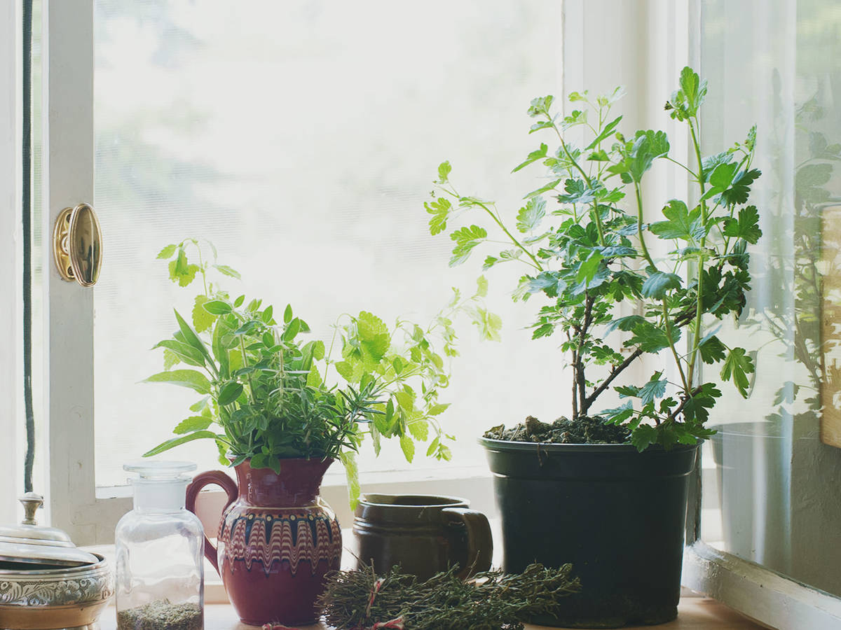How to Grow Herbs on Your Windowsill