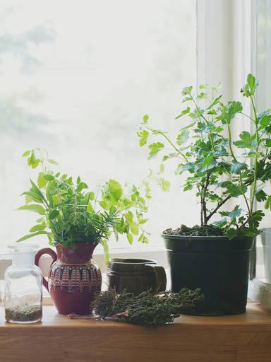 Wie du einen Kräutergarten auf deinem Fensterbrett anlegst