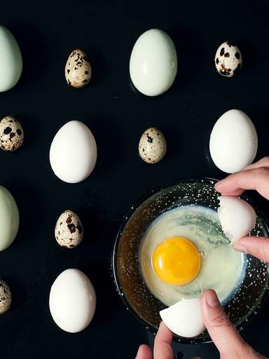 Ode an das Allmächtige Ei