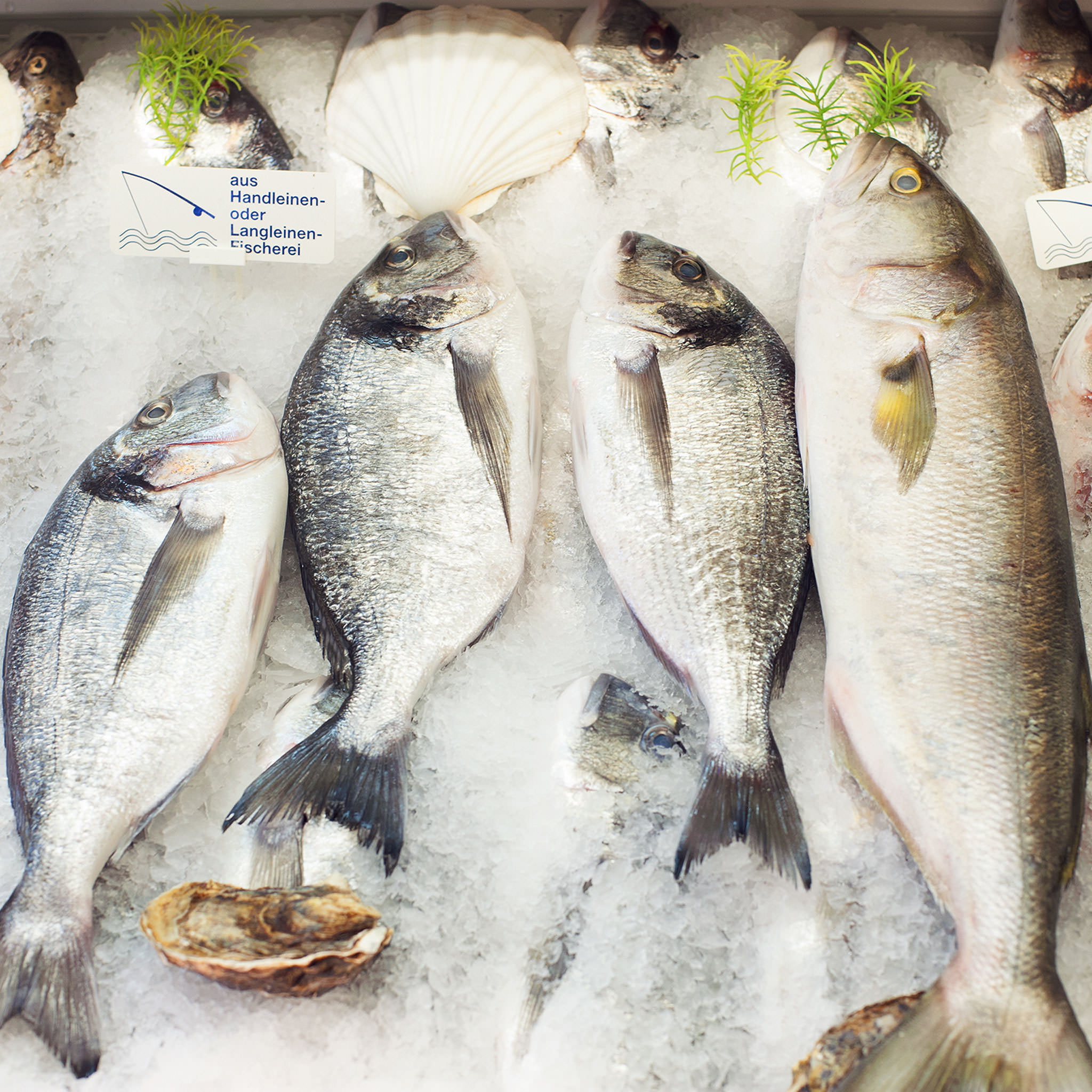 3 steps to selecting sustainable seafood stories for Most sustainable fish