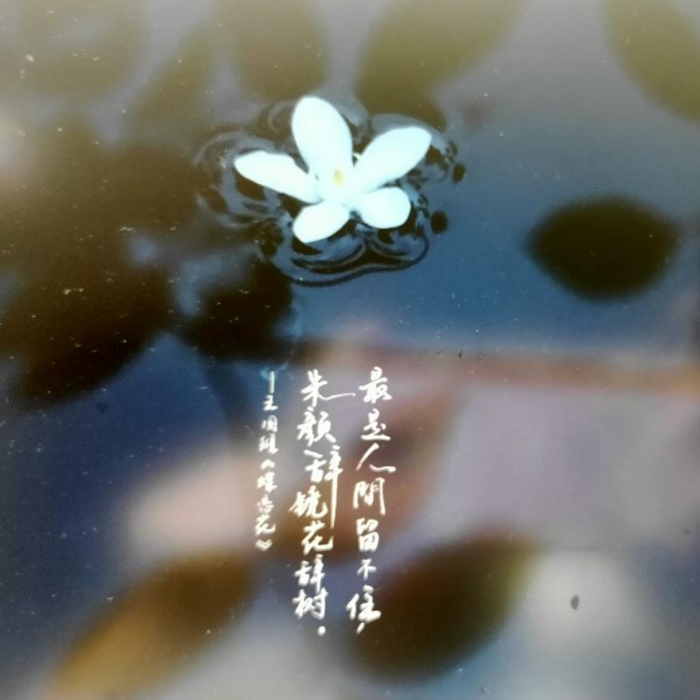 Image of 最可爱的⭐⭐