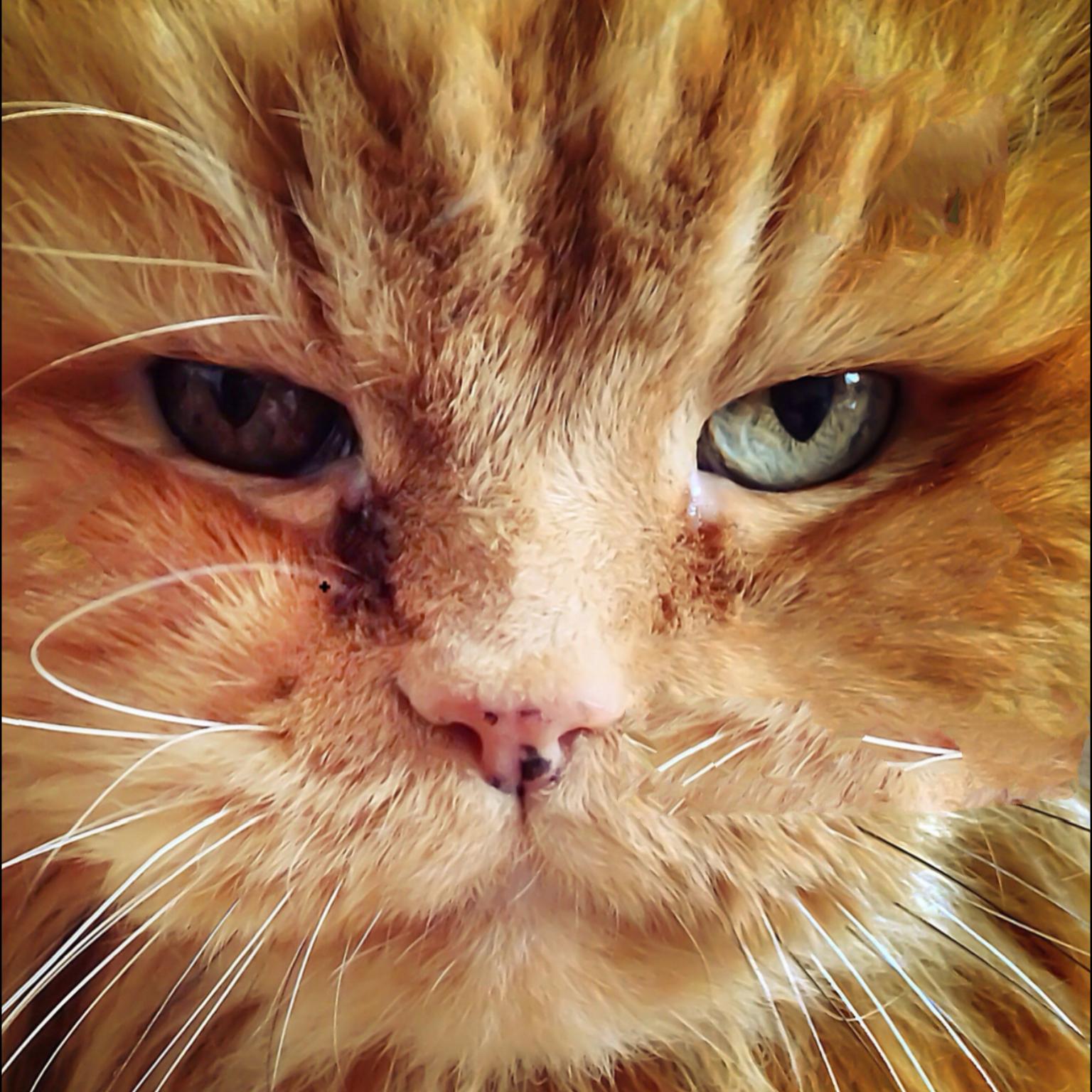 Image of Garfield1001