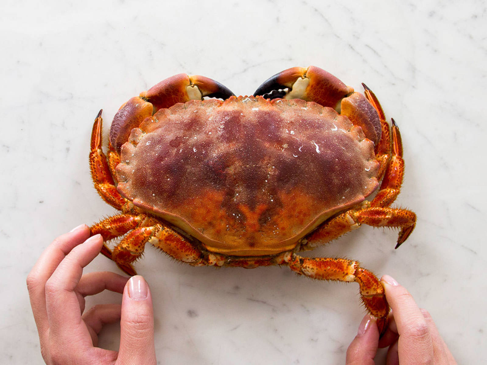 How to eat crab.