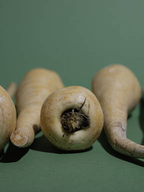 Everything You Need to Know About Preparing and Storing In Season Parsnip