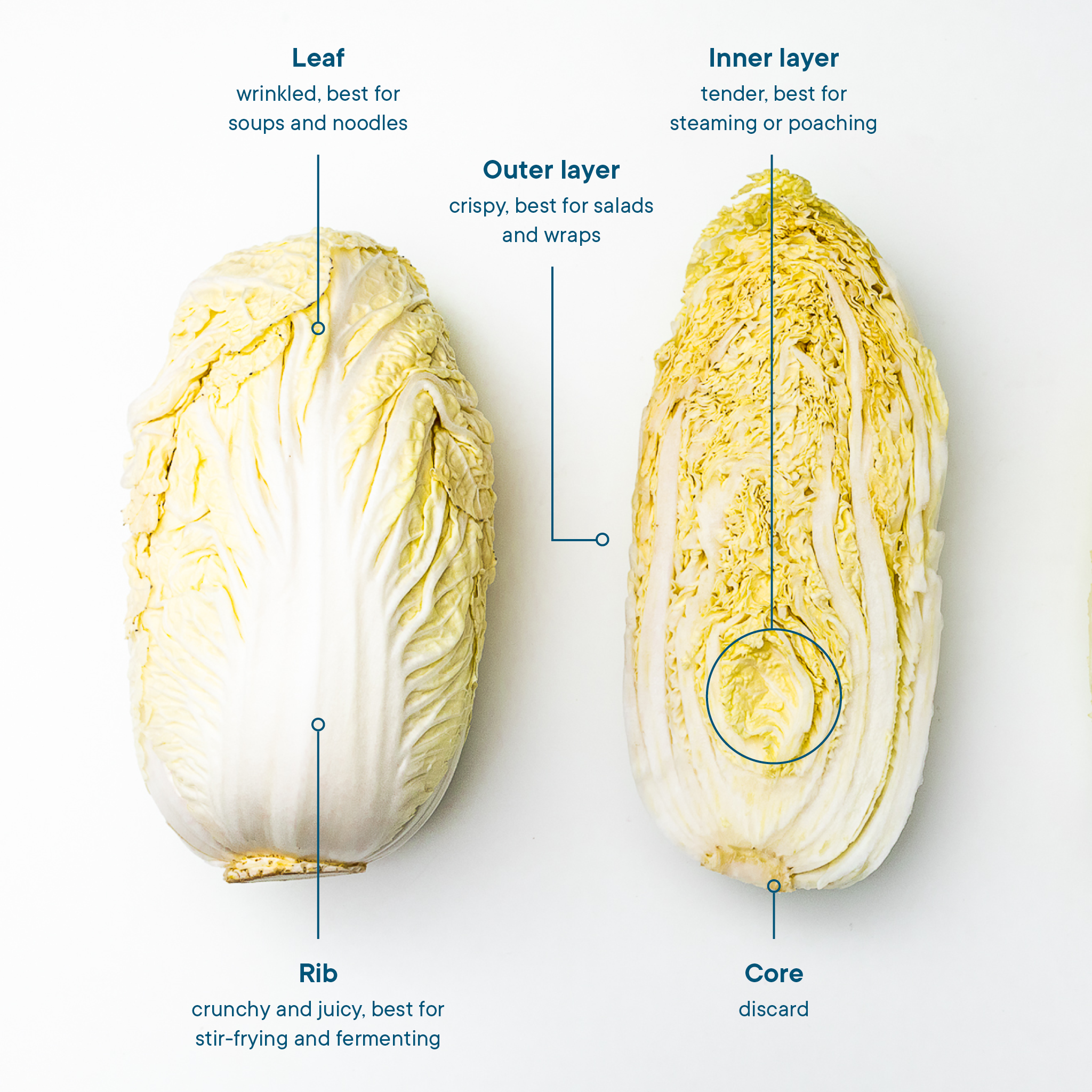Everything You Need To Know About Preparing And Storing Napa Cabbage Stories Kitchen Stories