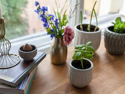 How to Regrow Herbs and Vegetables in the Kitchen