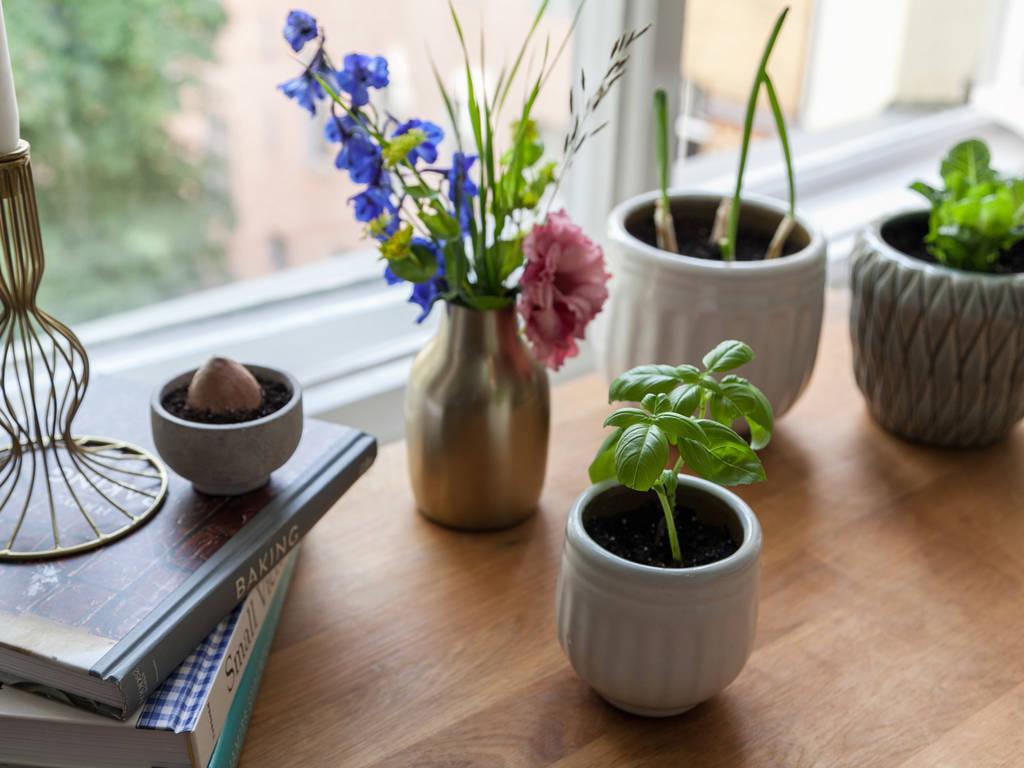 Kann Gemüse aus Küchenabfällen nachwachsen?