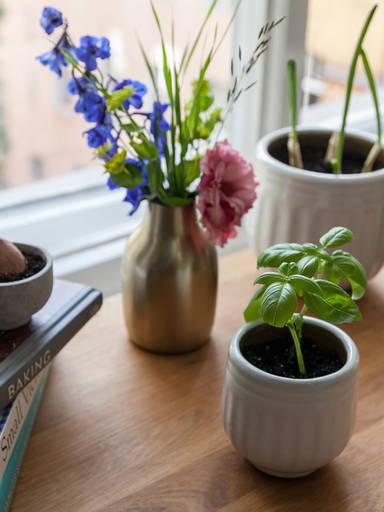如何在自家厨房种植草本和蔬菜边角料