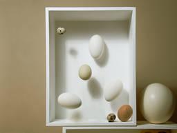 鸡蛋真的需要冷藏储存吗?