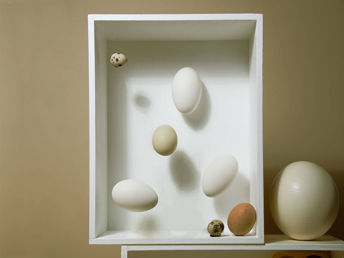 Müssen Eier im Kühlschrank gelagert werden?