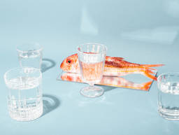 如何购买可持续海鲜