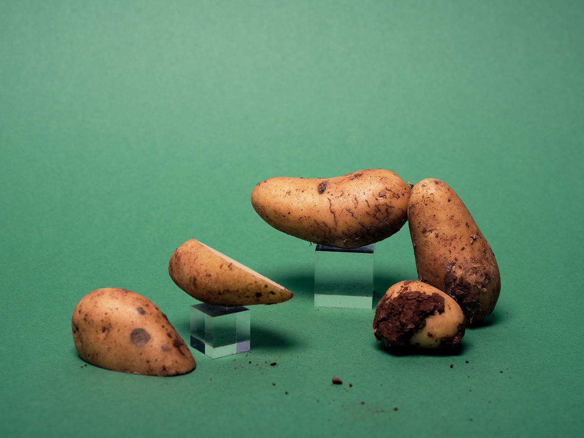 Everything to Know About Cooking and Shopping for In Season New Potatoes