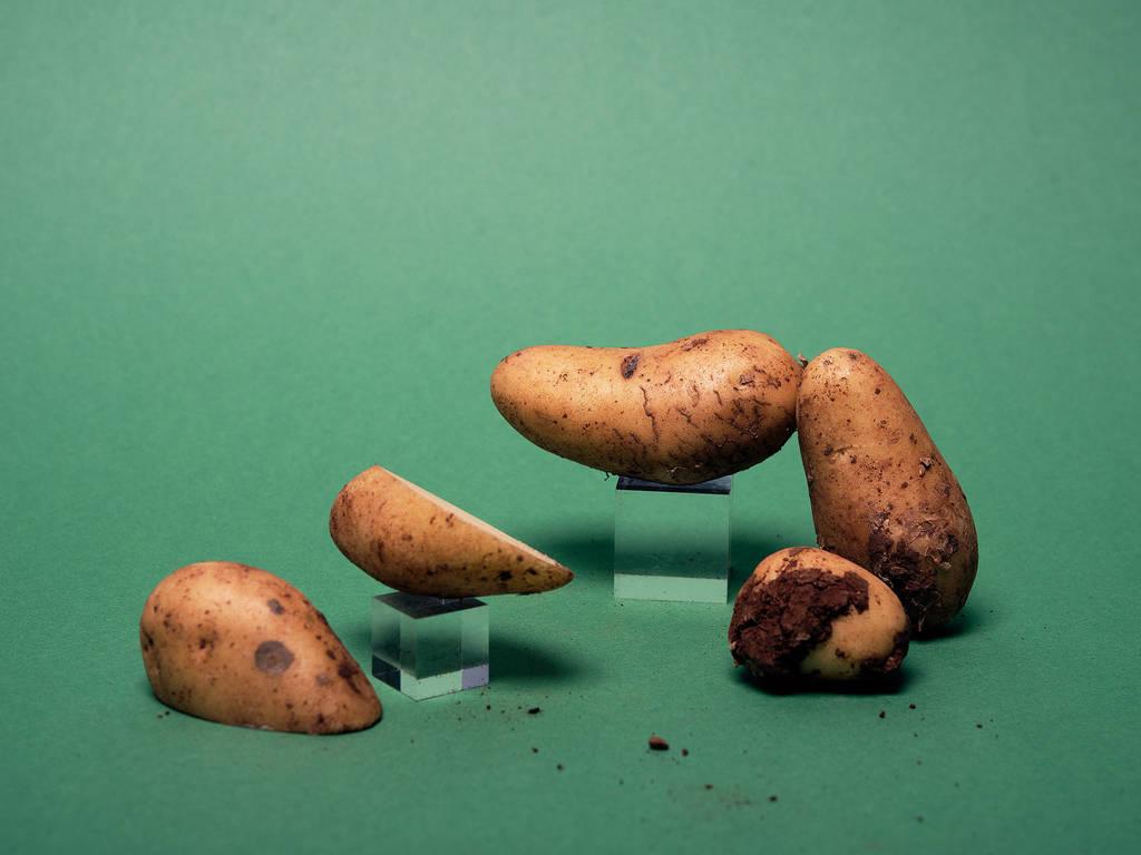 关于新收土豆,你应该知道的4件事