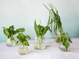 5种你值得拥有的春日草本