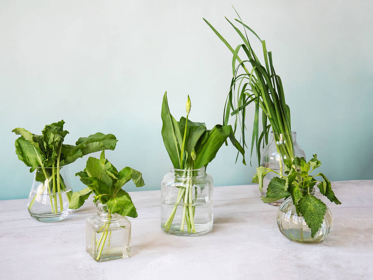 5 Little-Known Spring Herbs That Belong in Your Kitchen