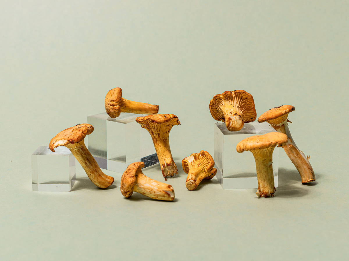 Everything You Need to Know About Shopping for, Storing, and Preparing In Season Chanterelle Mushrooms